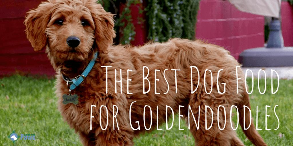 The Best Dog Food for Goldendoodles