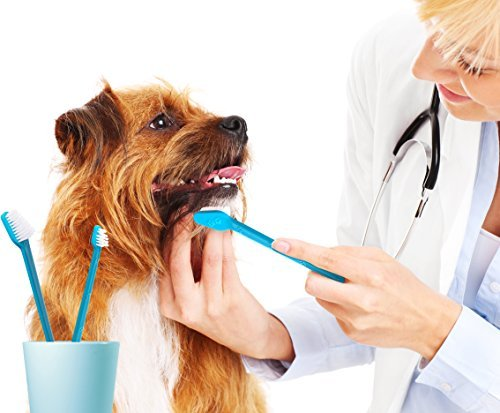 Dental care for dogs toothbrush