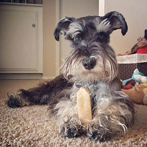 Dog eating Himalayan Dog Chew