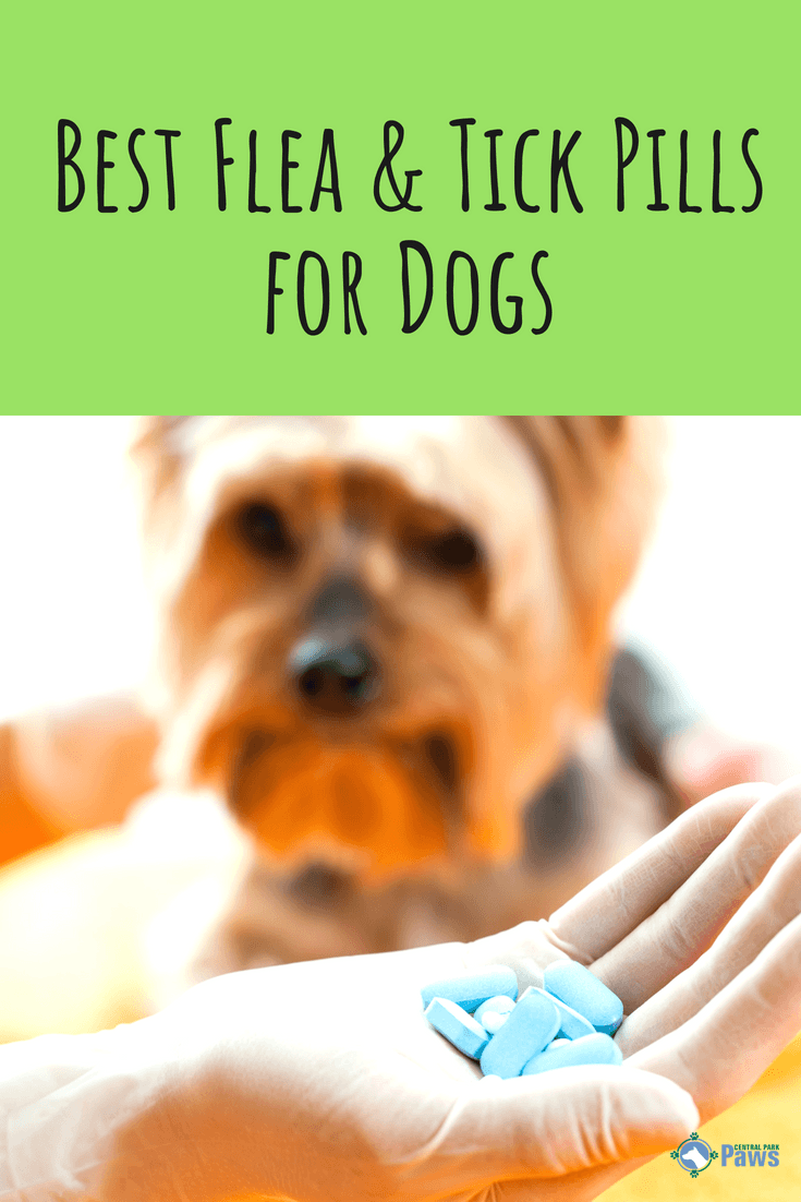Best Flea and Tick Pills for Dogs - Pinterest