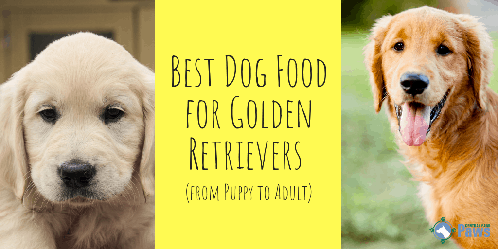 Best Dog Food for Golden Retrievers (from Puppy to Adult)