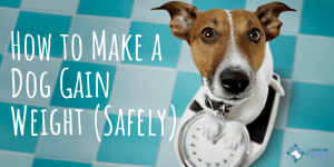 How to Make a Dog Gain Weight (Safely)