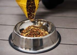 pouring golden retriever dog food into a bowl