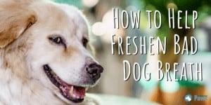 How to Help Freshen Bad Dog Breath