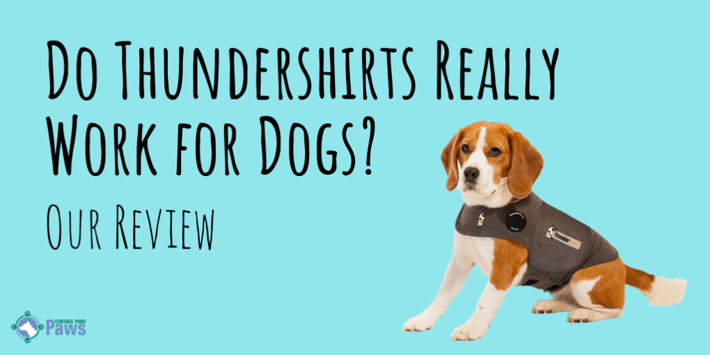 Thundershirt for Dogs Review