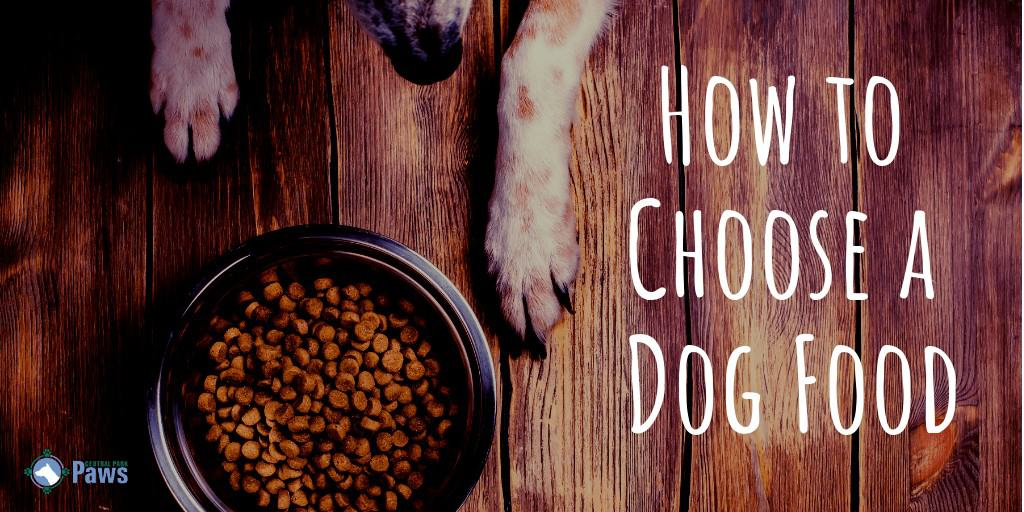 How to Choose a Dog Food