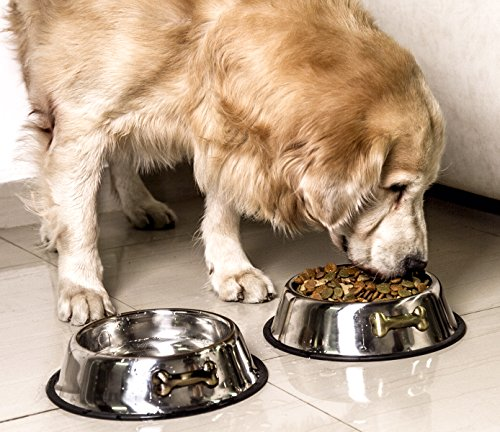 why do dogs get gassy from wolfing down food too quickly not digesting grains fillers