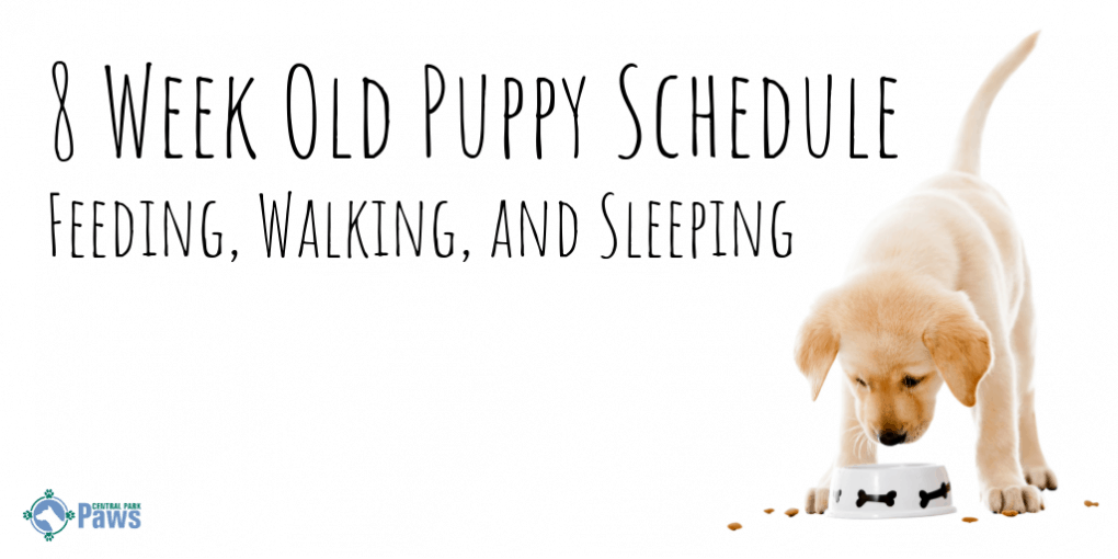 8 Week Old Puppy Schedule - Feeding, Walking, and Sleeping