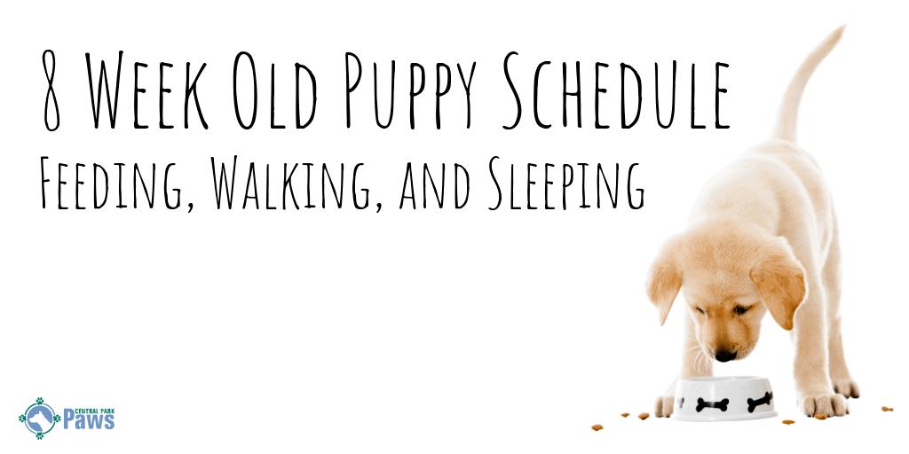 8 Week Old Puppy Schedule - Feeding, Walking, and Sleeping