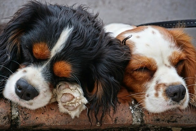 Dog pain medicine medication side effects drowsiness vomiting diarrhea