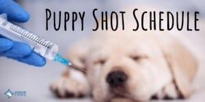 Puppy Shot Schedule