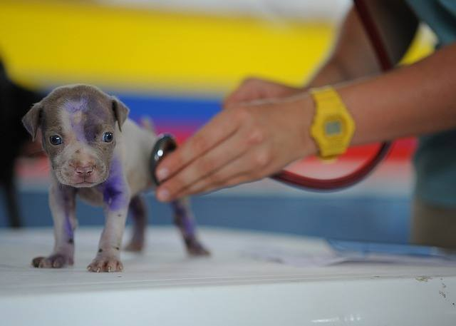 Best health insurance plan for newly adopted puppies Eusoh