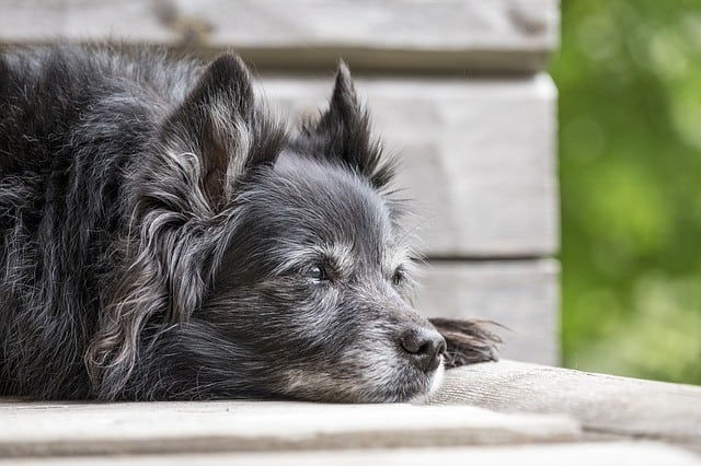 Retired dogs need different food low calories less active sensitive stomachs