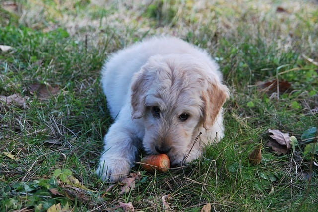 can dogs eat apples carrots help freshen bad puppy breath