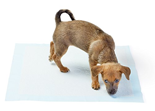dog puppy crate potty pads training peeing inside outside