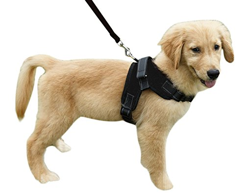 puppy leash training pulling against collar should I use harness