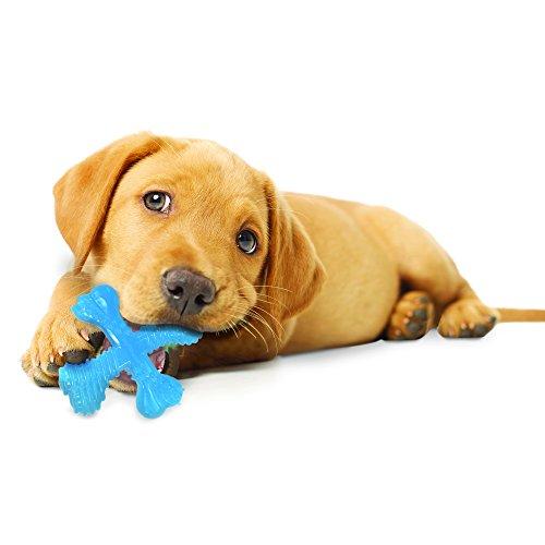 Nylabone puppy chew toy for teething weak grip gums bite strength