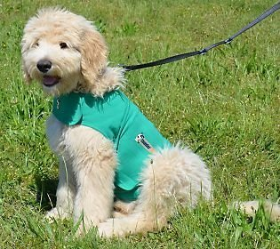 ThunderShirt anxious dog calming clothes for small dogs