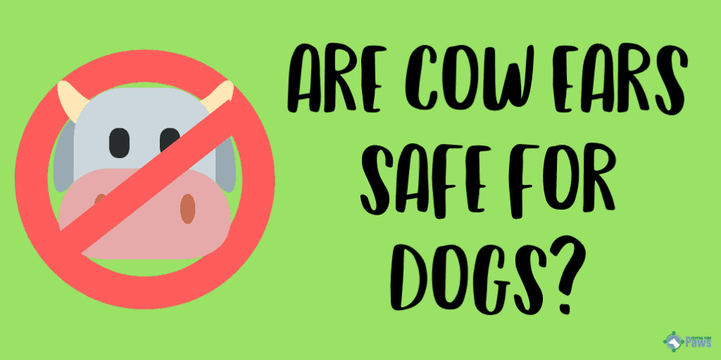 Are Cow Ears Safe for Dogs?