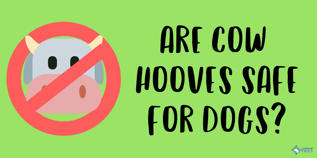 Are Cow Hooves Safe for Dogs?