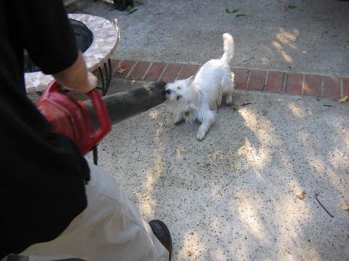 Blow dry dog after flea bath do not just towel dry prevent reinfestation