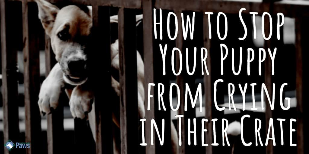 How to Stop My Puppy from Whining or Crying in his Crate