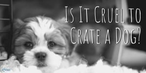 Is It Cruel to Crate a Dog?