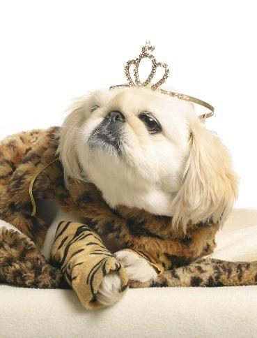 Princess pup demands high quality good tasting dry dog food