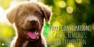 Puppy Constipation: Causes, Remedies, and Prevention