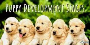 Puppy Development Stages