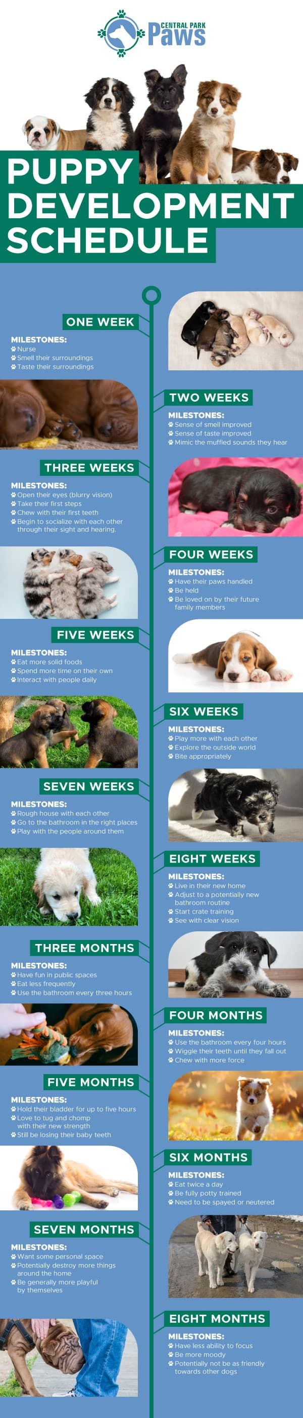 Puppy Development Stages Explained