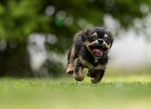 Puppy shots concerns reactions symptoms dangers what to watch out for