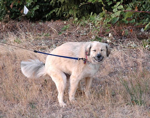 take dog for walk to relieve constipation exercise activity blood flow