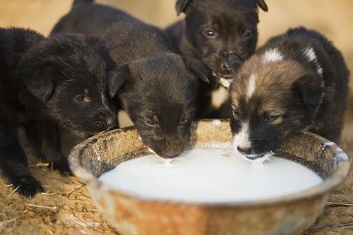 three week old puppies open eyes drink soft food