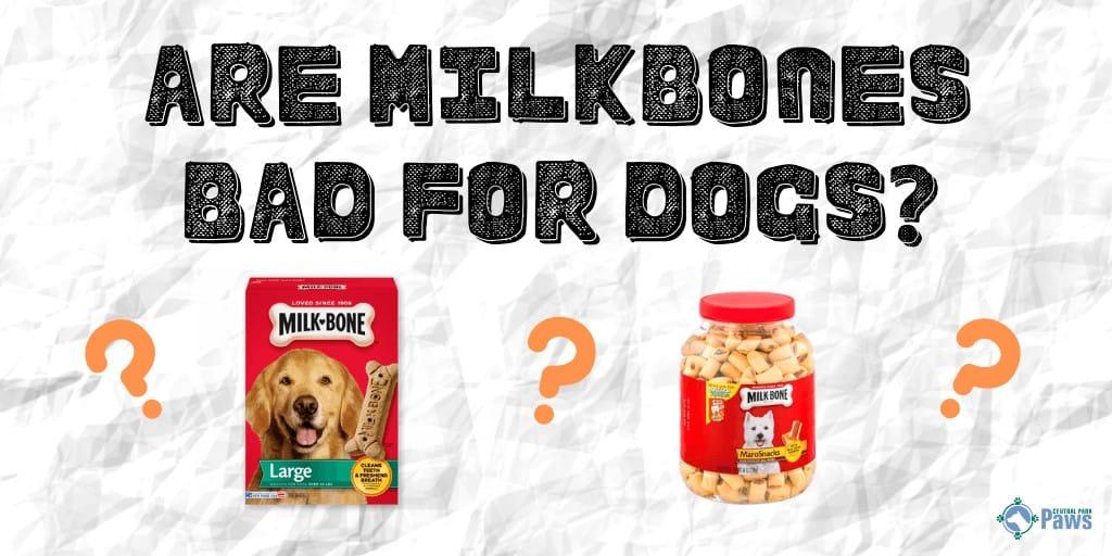 Are Milk Bones Bad for Dogs