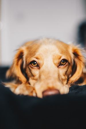 Dog Waiting for You