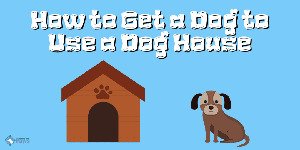 How to Get a Dog to Use a Dog House