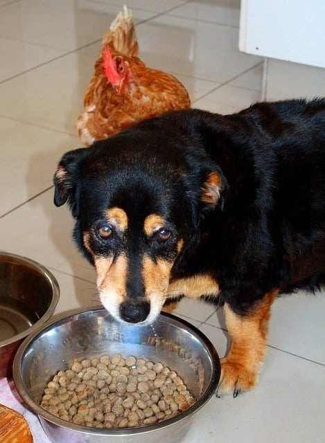 What to look for in dog food high quality natural ingredients chicken meal