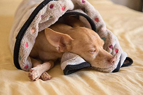Should you put blanket in dog crate yes no nesting pet comfort warmth
