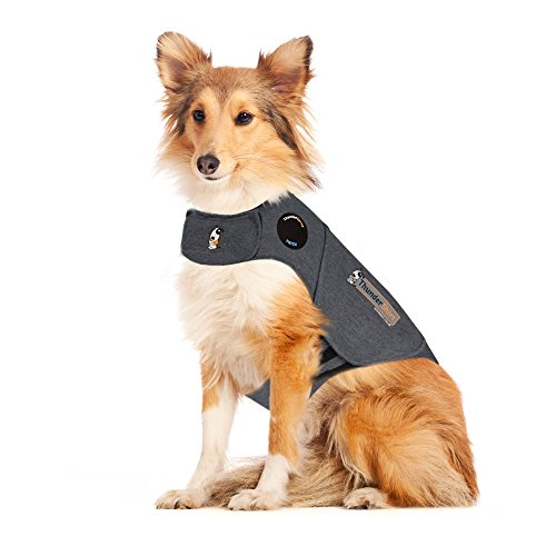CBD and ThunderShirt to relieve dog anxiety help calm canine down thunderstorm fireworks