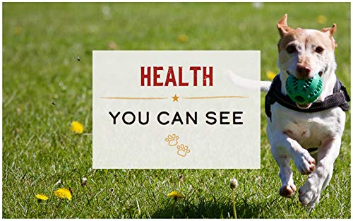 How to choose dry dog food for health fight disease provide energy coat