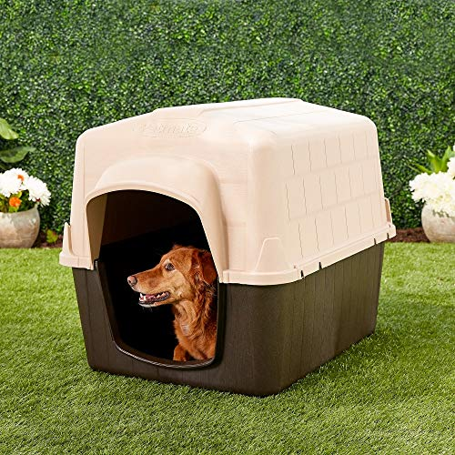 How to trick adult dog into loving doghouse good location safe shelter