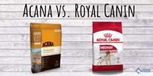 Acana vs. Royal Canin Dog Food Review
