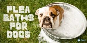Flea Baths for Dogs