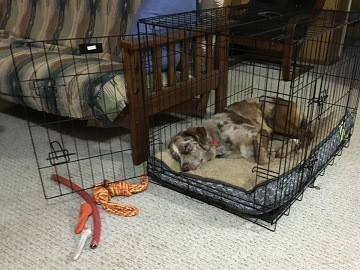 Good location for dog crate comfortable relaxing location next to family