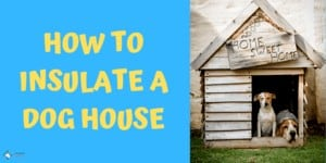 How to Insulate Plastic or Wooden Dog House
