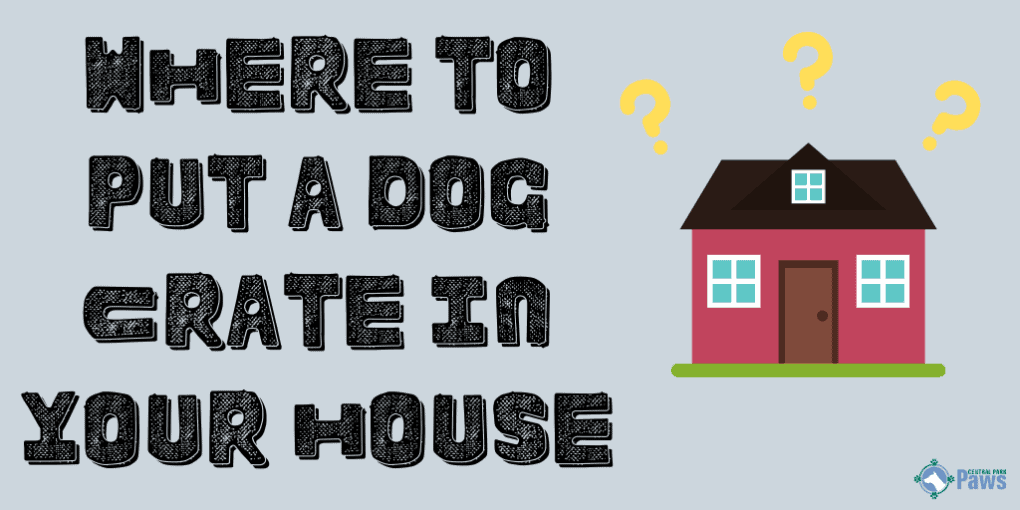 Where to Put a Dog Crate in the House
