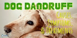 Dog Dandruff: Causes, Symptoms, Treatment, Prevention, And How to Get Rid of It