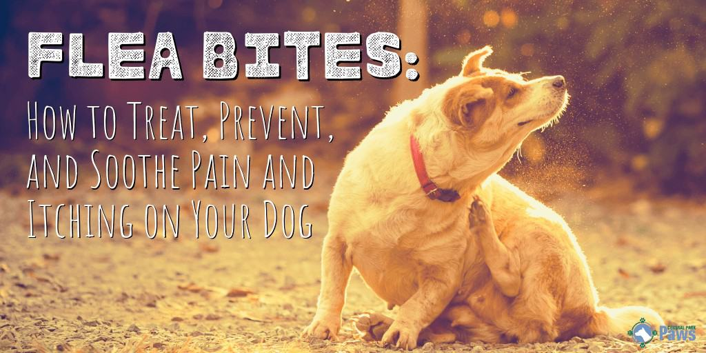 Flea Bites: How to Treat, Prevent, and Soothe Pain and Itching on Your Dog