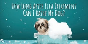 How Long After Treatment Can I Bathe My Dog_ Pills, Tablets, Collars, and Drops (Topical)